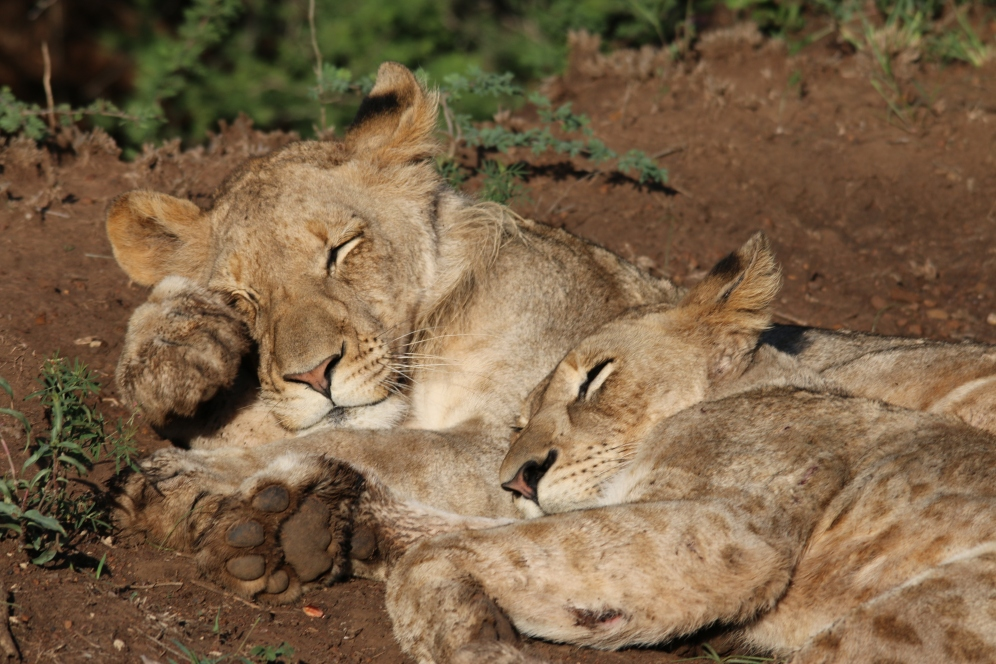 The brother and sister from the Northern Pride. Image credit: Andi van Zyl